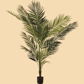 Palms, bamboo & plants