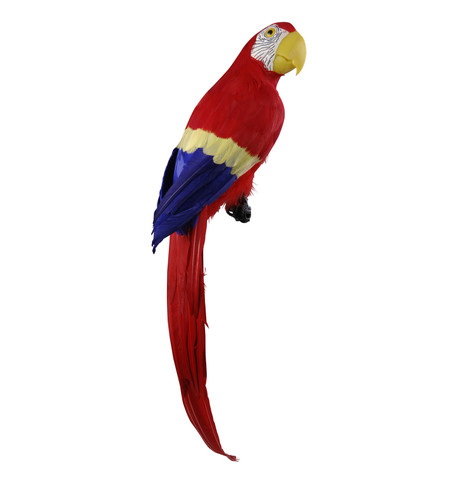 MACAW - RED Red