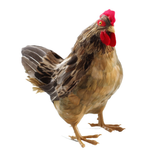 HEN Neutral