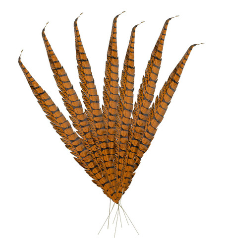 PHEASANT FEATHERS  Brown