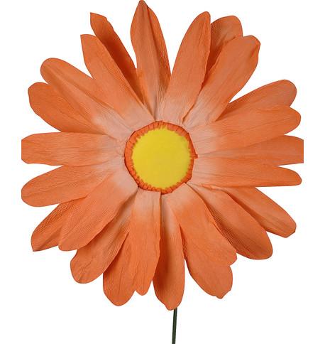PARCHMENT GERBERA Orange