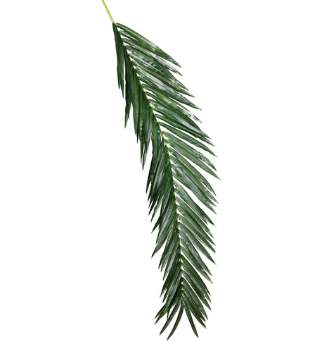 GIANT OIL PALM BRANCH Green