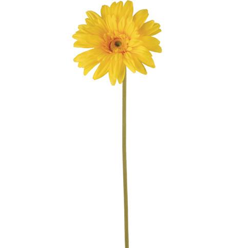 GERBERA - YELLOW Yellow