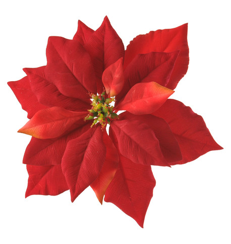 POINSETTIAS WITH CLIP Red