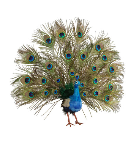 PEACOCK Turquoise