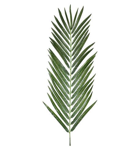 ARECA PALM LEAF Green