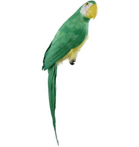MACAW - GREEN Green