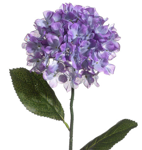 HYDRANGEA - BLUE Blue