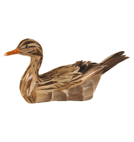 MALLARD DUCK Brown