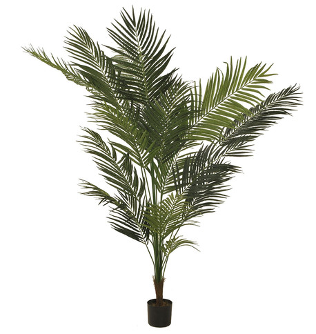 ARECA PALM Green