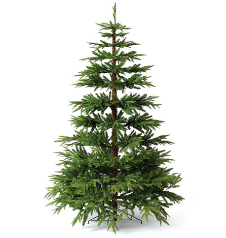 Woodland Pine Tree Green