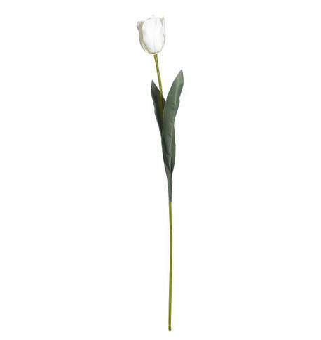 TULIPS - WHITE White