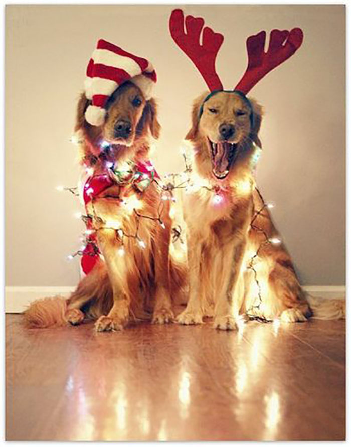 CALLING ALL DOG LOVERS THIS CHRISTMAS!