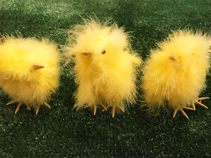 Chick us out!