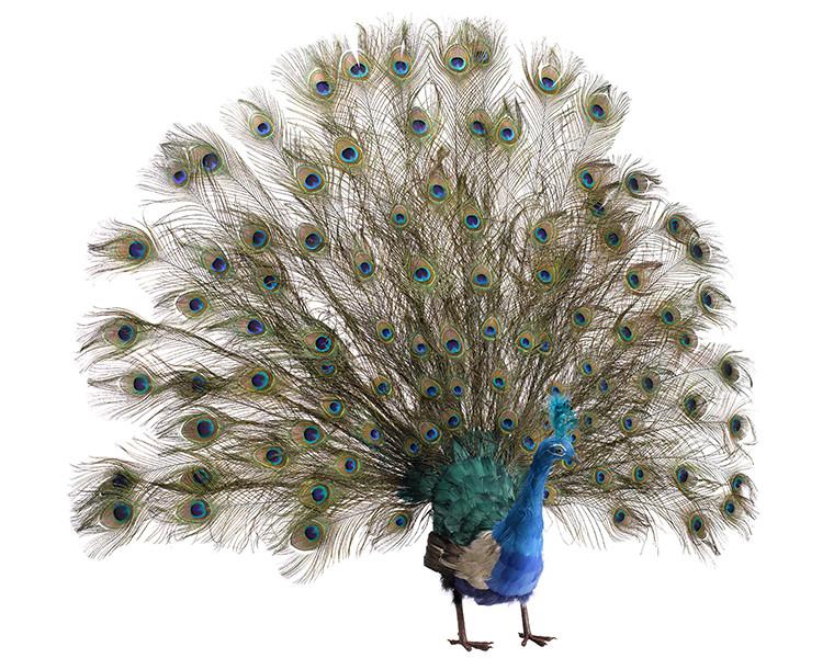 Imitation Birds
