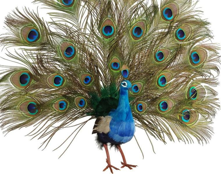 Artificial Display Birds & Bird Cages