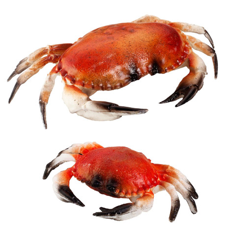CRABS Red