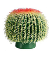 BARREL CACTUS - Green