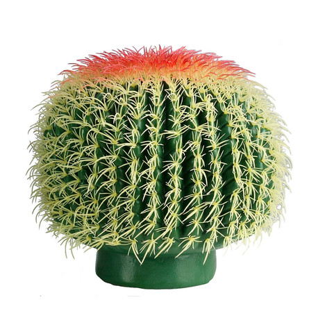 BARREL CACTUS Green