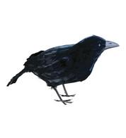 CROW - Black