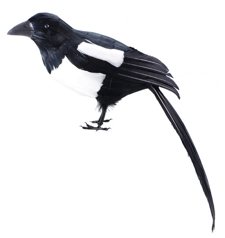MAGPIE Black and White