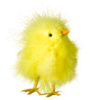 CHICKS - Yellow
