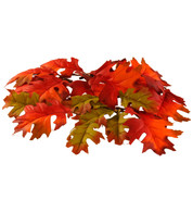 OAK LEAVES  - Multi