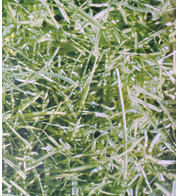 HIGHLANDS PHOTOPRINT PVC - Green