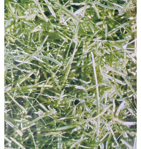 HIGHLANDS PHOTOPRINT PVC Green