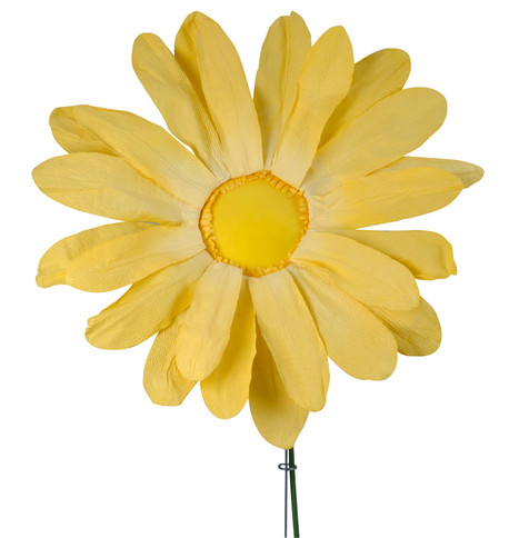 PARCHMENT GERBERA Yellow