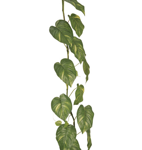 GIANT POTHOS GARLAND  Green