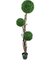 BOXWOOD TRIPLE BALL TOPIARY - Green