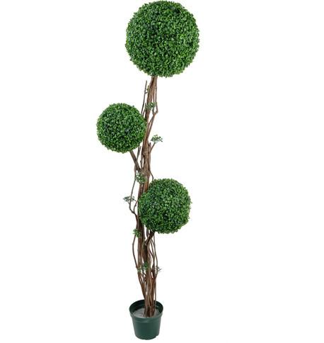 BOXWOOD TRIPLE BALL TOPIARY Green