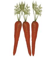 CARROTS - Orange