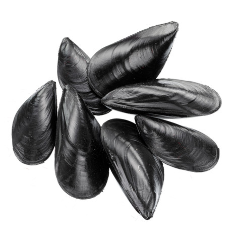 MUSSELS Black