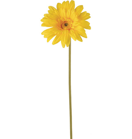 GERBERA - YELLOW Yellow