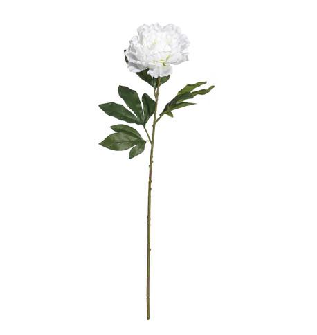 PEONY - WHITE White