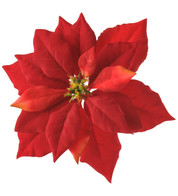 POINSETTIAS WITH CLIP - Red