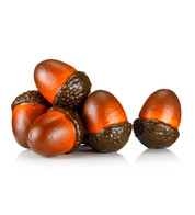 GIANT ACORNS - Natural