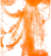 SPIDER WEB - ORANGE - Orange