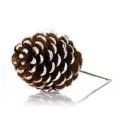 PINE CONE PICKS - WHITE TIPPED - Brown
