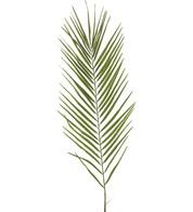 PHOENIX PALM LEAF - Green