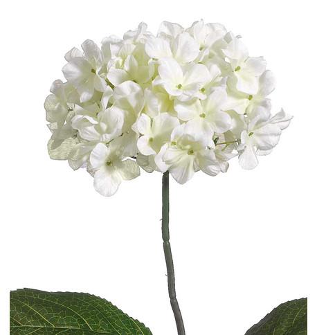 HYDRANGEAS - WHITE White