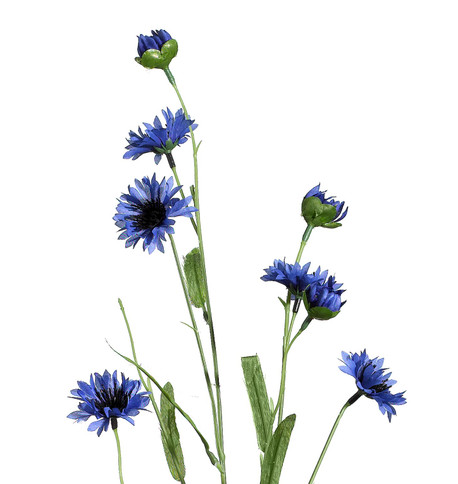 CORNFLOWER SPRAY Blue