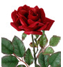 ROSE STEM  Red