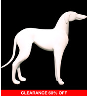 GREYHOUND - WHITE - White