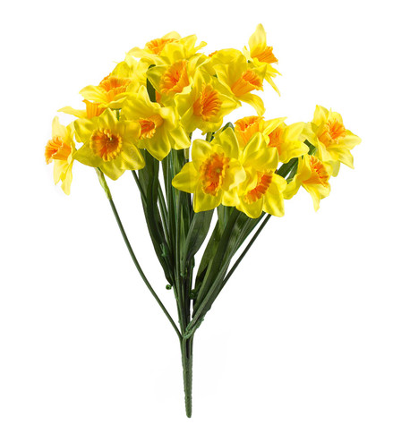 DAFFODIL BUNCH WITH LEAVES Yellow