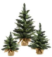 MINI COLORADO TREES - Green