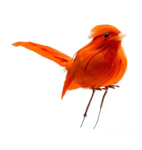 PERCHED BIRDS Multi