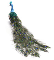LARGE PEACOCK - CLOSED TAIL - Turquoise